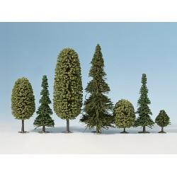 Bosque Mixto, 10 Árboles