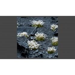 White Flowers Wild