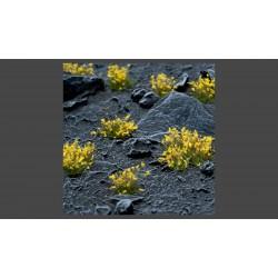 Yellow Flowers Wild