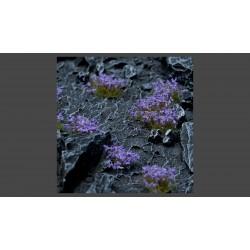 Violet Flowers Wild