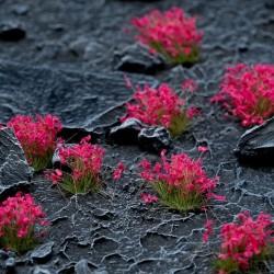Pink Flowers Wild