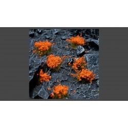 Orange Flowers Wild